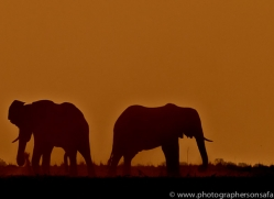 Elephant 2014-14copyright-photographers-on-safari-com