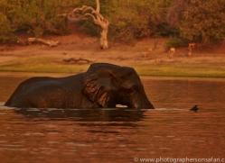 Elephant 2014-16copyright-photographers-on-safari-com