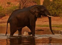 Elephant 2014-18copyright-photographers-on-safari-com