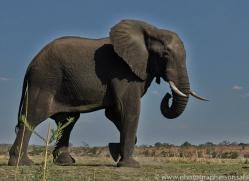 Elephant 2014-1copyright-photographers-on-safari-com