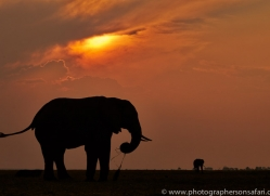 Elephant 2014-22copyright-photographers-on-safari-com