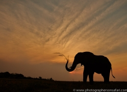 Elephant 2014-23copyright-photographers-on-safari-com