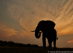 Elephant 2014-24copyright-photographers-on-safari-com