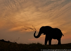 Elephant 2014-25copyright-photographers-on-safari-com