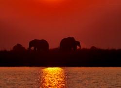 Elephant 2014-27copyright-photographers-on-safari-com