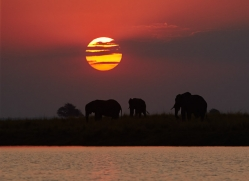 Elephant 2014-28copyright-photographers-on-safari-com