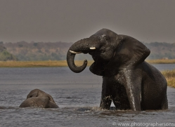 Elephant 2014-6copyright-photographers-on-safari-com