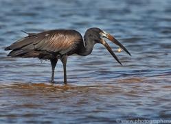Open Billed Stork 2014-1copyright-photographers-on-safari-com