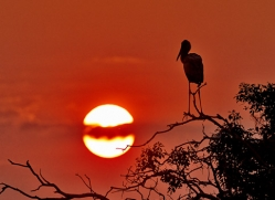 Stork 2014-1copyright-photographers-on-safari-com