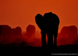 elephant-at-sunset-4414-botswana-copyright-photographers-on-safari