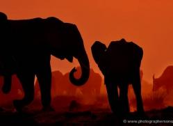 elephant-at-sunset-4415-botswana-copyright-photographers-on-safari