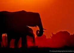 elephant-at-sunset-4417-botswana-copyright-photographers-on-safari