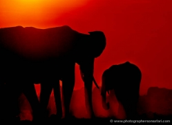 elephant-at-sunset-4418-botswana-copyright-photographers-on-safari