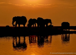 elephant-at-sunset-4420-botswana-copyright-photographers-on-safari