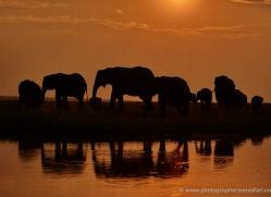 elephant-at-sunset-4422-botswana-copyright-photographers-on-safari