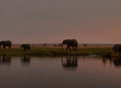 elephant-at-sunset-4426-botswana-copyright-photographers-on-safari