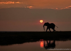 elephant-at-sunset-4434-botswana-copyright-photographers-on-safari