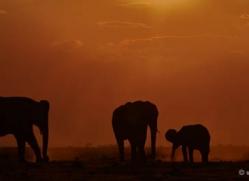 elephant-at-sunset-4439-botswana-copyright-photographers-on-safari