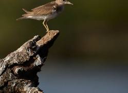 sandpiper-4541-botswana-copyright-photographers-on-safari