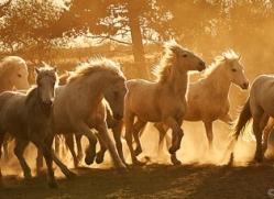 camargue-horses-extension-copyright-photographers-on-safari-com-9346