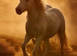 camargue-horses-extension-copyright-photographers-on-safari-com-9352