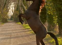 camargue-horses-extension-copyright-photographers-on-safari-com-9365