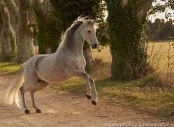 camargue-horses-extension-copyright-photographers-on-safari-com-9368