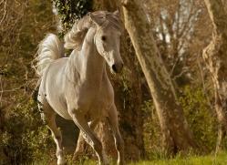 camargue-horses-extension-copyright-photographers-on-safari-com-9373
