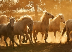 camargue-horses-extension-copyright-photographers-on-safari-com-9346