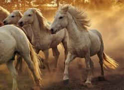 camargue-horses-extension-copyright-photographers-on-safari-com-9356