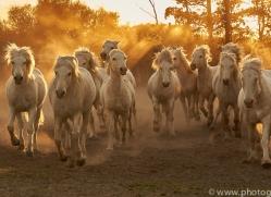 camargue-horses-extension-copyright-photographers-on-safari-com-9361