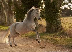 camargue-horses-extension-copyright-photographers-on-safari-com-9368