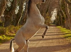 camargue-horses-extension-copyright-photographers-on-safari-com-9369