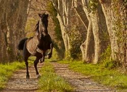 camargue-horses-extension-copyright-photographers-on-safari-com-9370
