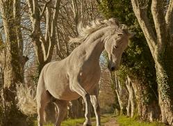 camargue-horses-extension-copyright-photographers-on-safari-com-9371