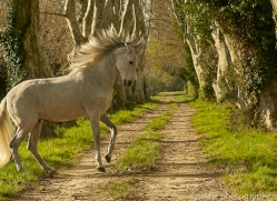camargue-horses-extension-copyright-photographers-on-safari-com-9372