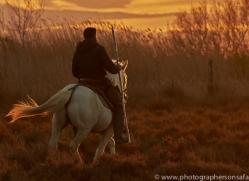 camargue-horses-extension-copyright-photographers-on-safari-com-9379
