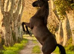 camargue-horses-extension-copyright-photographers-on-safari-com-9395