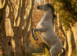 camargue-horses-extension-copyright-photographers-on-safari-com-9397