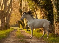 camargue-horses-extension-copyright-photographers-on-safari-com-9398