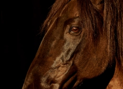 camargue-horses-extension-copyright-photographers-on-safari-com-9402