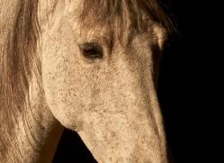 camargue-horses-extension-copyright-photographers-on-safari-com-9405
