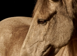 camargue-horses-extension-copyright-photographers-on-safari-com-9406