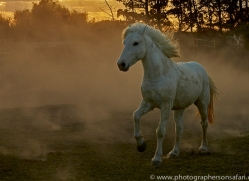 camargue-horses-extension-copyright-photographers-on-safari-com-9419