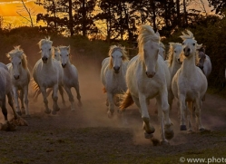 camargue-horses-extension-copyright-photographers-on-safari-com-9421