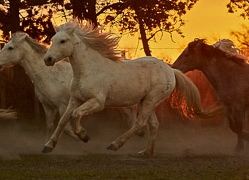 camargue-horses-extension-copyright-photographers-on-safari-com-9437