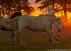 camargue-horses-extension-copyright-photographers-on-safari-com-9439