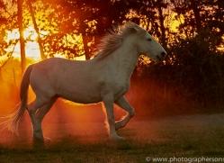 camargue-horses-extension-copyright-photographers-on-safari-com-9444