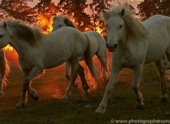 camargue-horses-extension-copyright-photographers-on-safari-com-9447