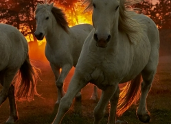 camargue-horses-extension-copyright-photographers-on-safari-com-9448